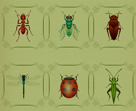 insect animal collection