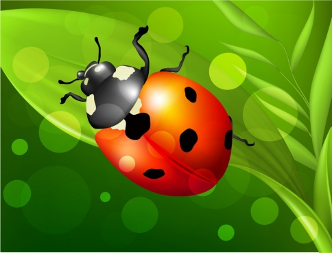 insect background ladybug icon multicolored decoration