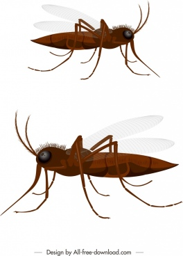 insect background mosquito icon 3d brown design