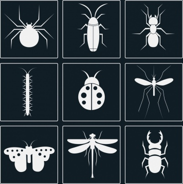 insect icons sets white silhouettes design various types