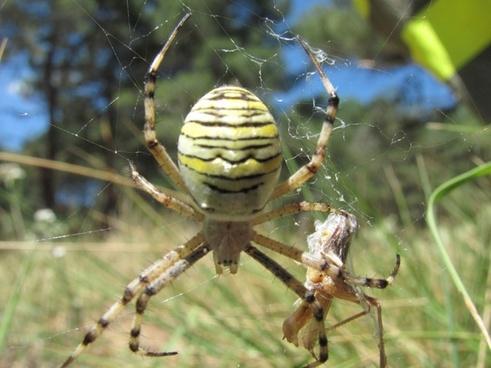 insect yellow macro