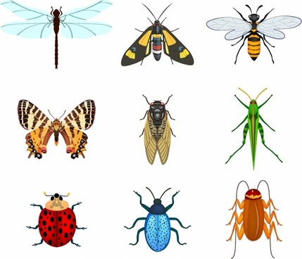 free vector insects free vector download 780 free vector