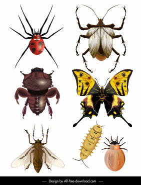 insects species icons shiny colored modern design