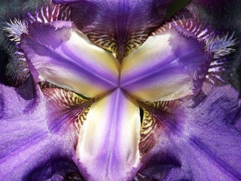 inside an iris 2