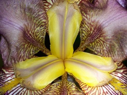 inside an iris 3