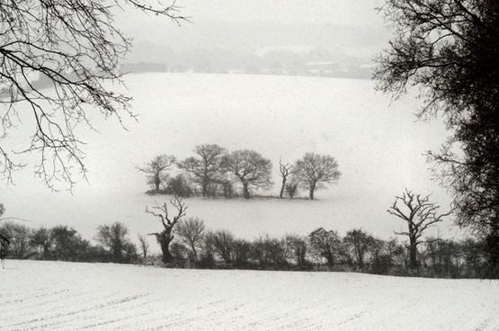 isolation trees snow