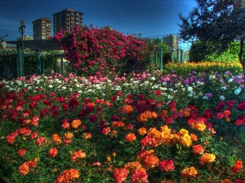 istanbul landscape flowers