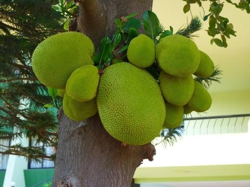 Jackfruit Hd Images