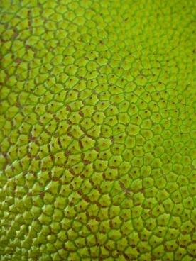 jack jackfrucht green large