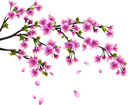 cherry blossom tree vector free vector download (5,541 free vector