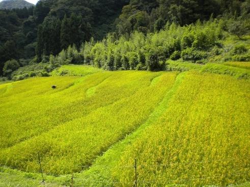 japan landscape summer