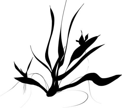 Java Plant clip art