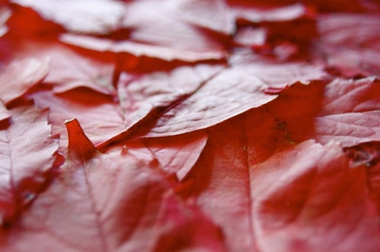 journal autumn red