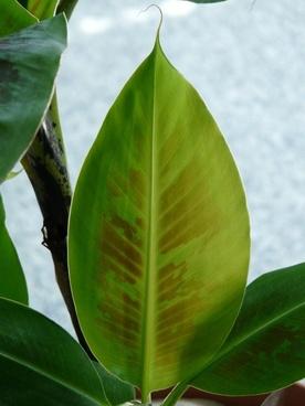 journal banana leaf green