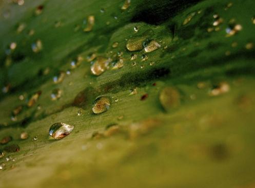 journal drop of water water