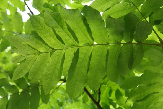 journal green leaf fronds