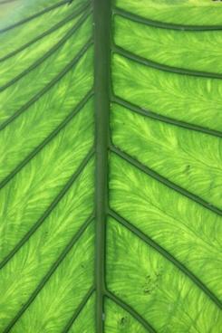 journal green leaf veins