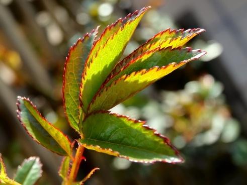 journal green plant