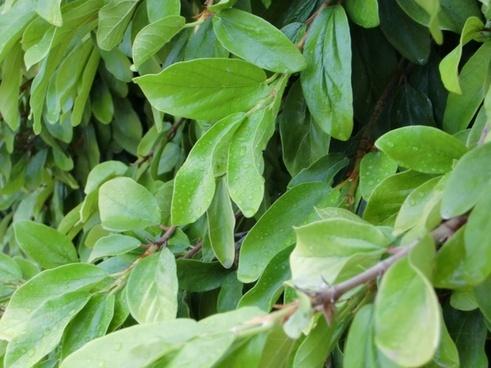 journal leaves green