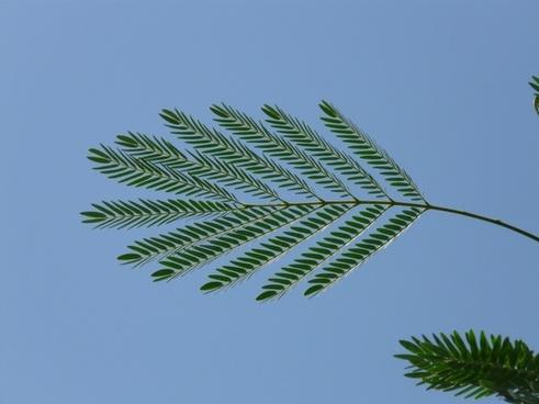 journal wedel acacia