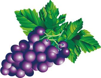 juicy fresh grapes design vector set