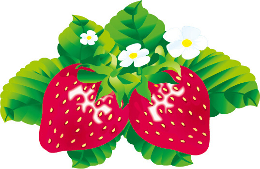 juicy fresh strawberries set vector