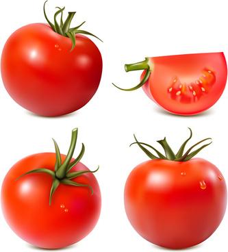 juicy fresh tomato graphics vector