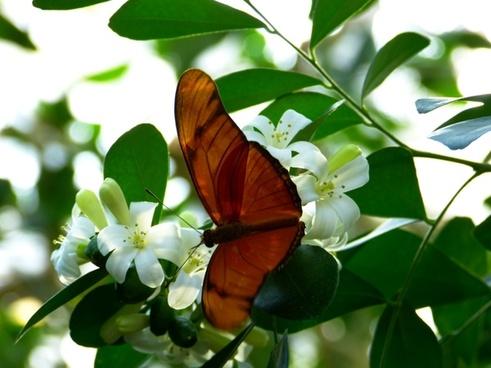 julia butterfly butterfly fly