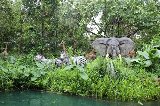 jungle animals zebra
