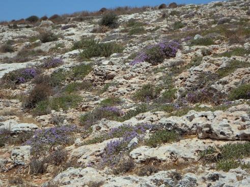 karg bloom wild herbs