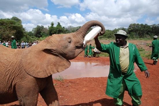 kenya africa elephant