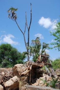 kenya africa nature