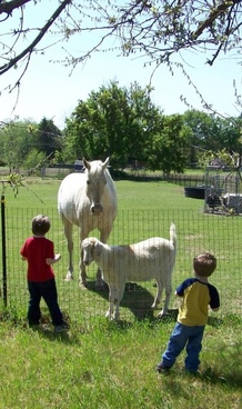 kids and farm animals