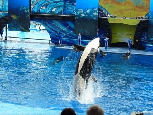killer whale whale performance