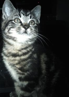 kitten looking affection