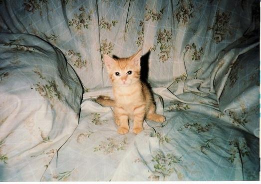 kitten sitting on throne