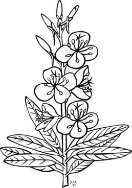 Ku Epilobium Angustifolium Outline clip art