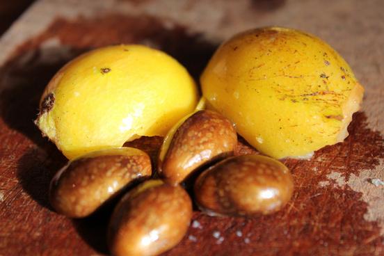 kumquats and their seeds