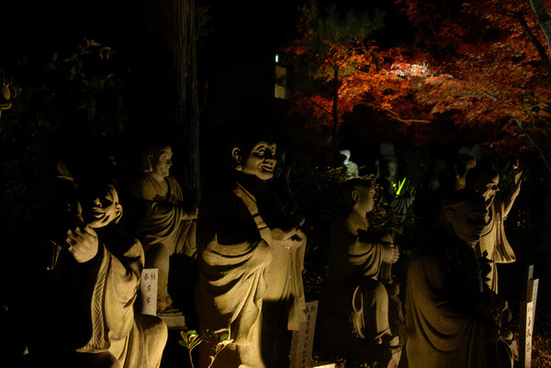 kyoto autumn leaves japan night shot