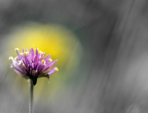 la fleur de lt