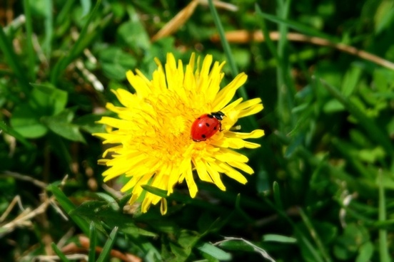 lady bug bugs