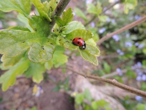 ladybird the ladybug sheet