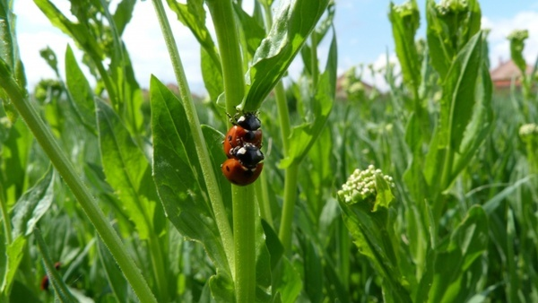 ladybug bug grass