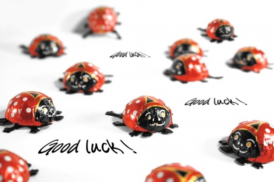 ladybug luck greeting card