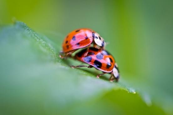 ladybug pair pairing