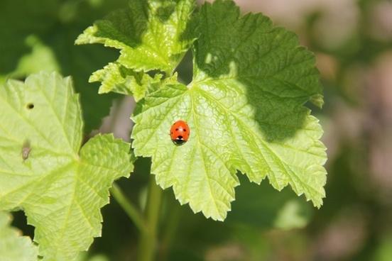ladybug stinging nettle flower