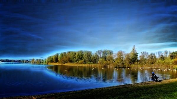 lake natural tree