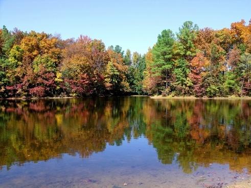 lake tree fall