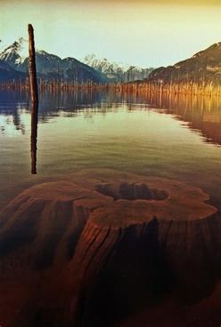 lake tree stump water