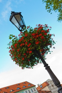 lamp post with flowers